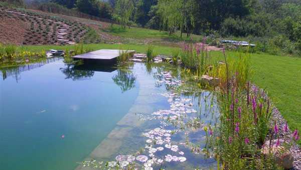 piscina naturale tutte le info idee green