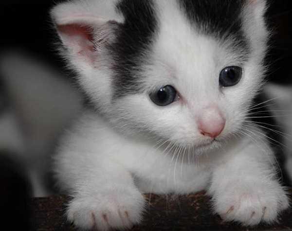 unghie gatti2