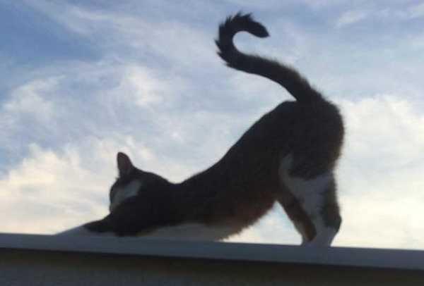 unghie gatti3