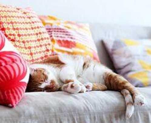 film con gatti7
