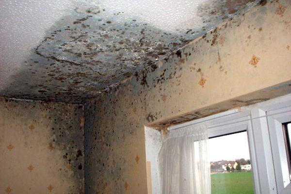 Eliminare la muffa dalle pareti