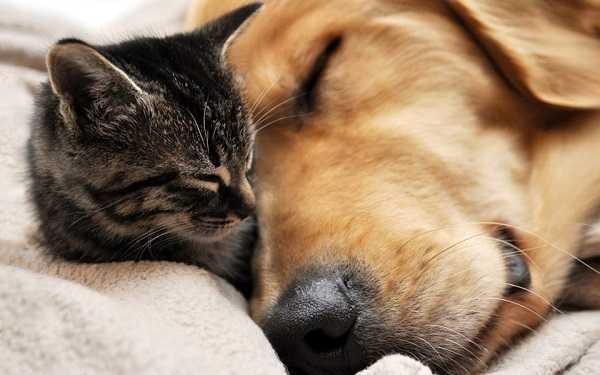 ascaridi nel cane e nel gatto