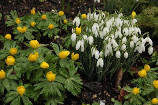 Giardino fiorito tutto l 39 anno idee green for Piante perenni per bordure