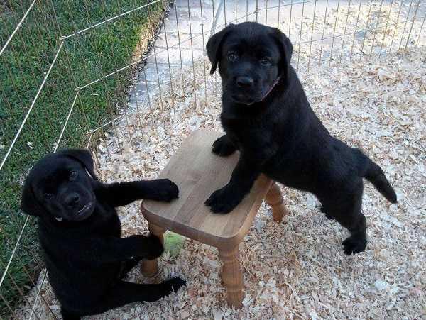 cibi naturali per cani alimentazione commerciale