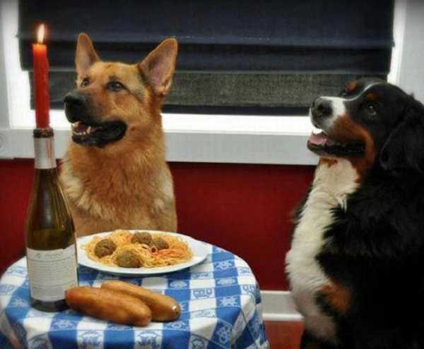 cibi naturali per cani