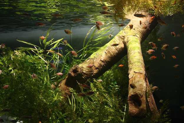 come introdurre pesci acquario