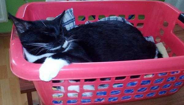 come lavare un gatto preparazione