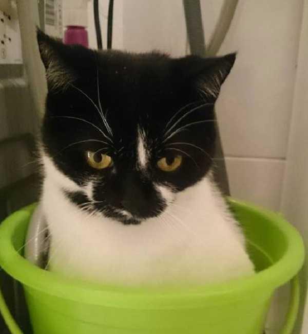 come lavare un gatto il bagno