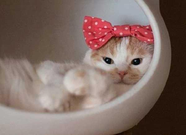 come lavare un gatto asciugatura