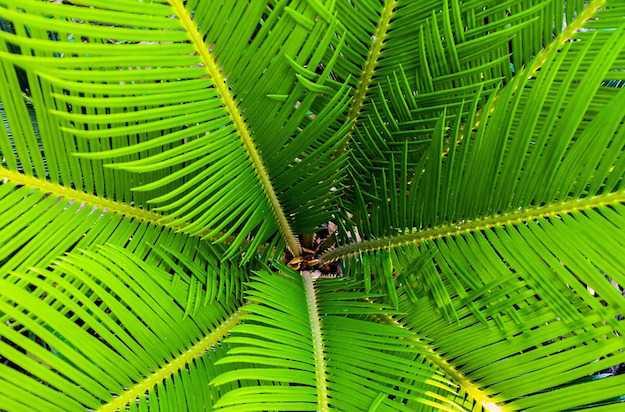 come proteggere le palme dal freddo