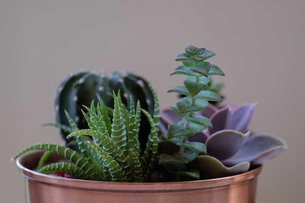 cura delle piante grasse