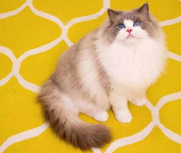 come far perdere peso al gatto