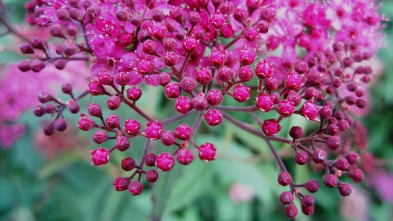 Fiori Da Vaso Perenni giardino in fiore tutto l'anno - idee green