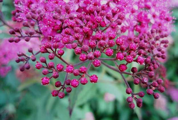 giardino in fiore tutto l anno