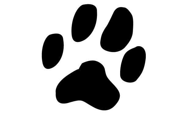 impronta del gatto