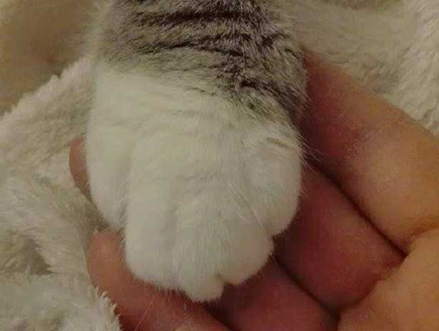 impronta del gatto come prenderla
