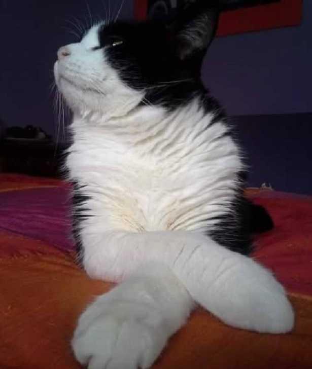 impronta del gatto come riconoscerla