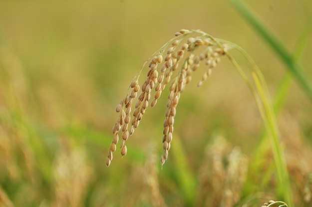 legge sulla biodiversità