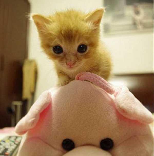 lettiera autopulente per gatti come funziona