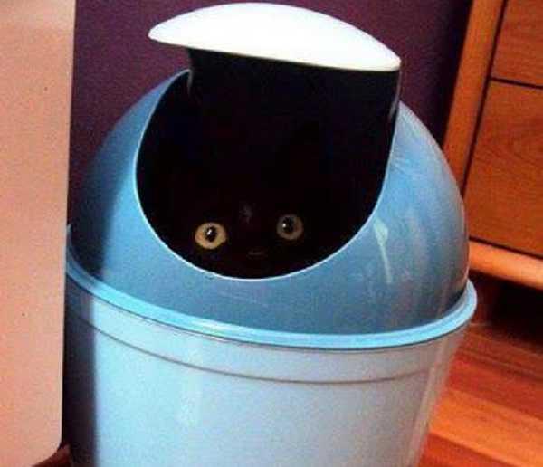 lettiera autopulente per gatti