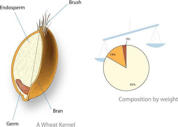 olio germe di grano alimentare