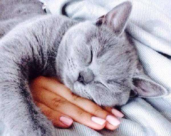 periodo di gestazione dei gatti