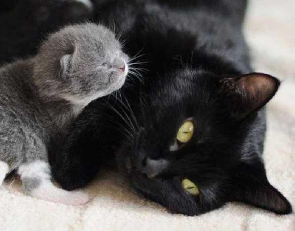 periodo di gestazione dei gatti: pre termine