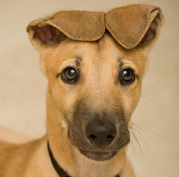 cane pauroso