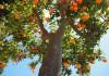 come e quando potare aranci