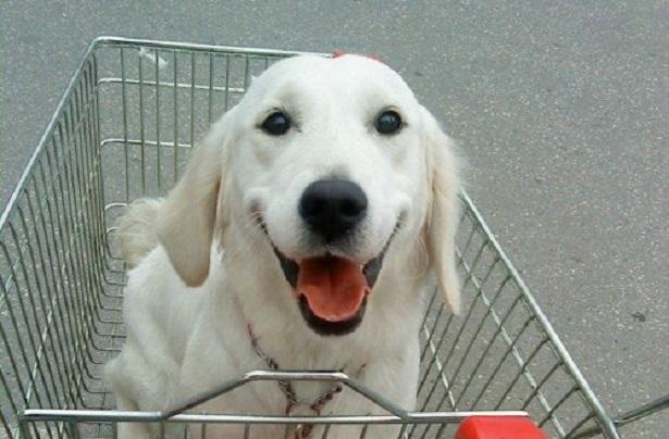 Come accogliere in casa un cane del canile: ecco cosa ...