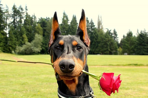 coprofagia nel cane rimedi naturali