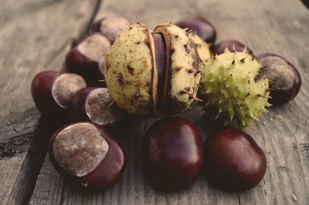 frutto ippocastano