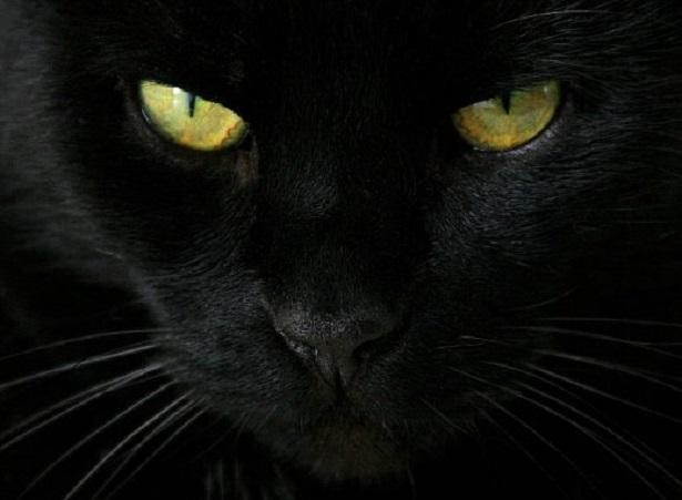 Risultati immagini per gatto nero