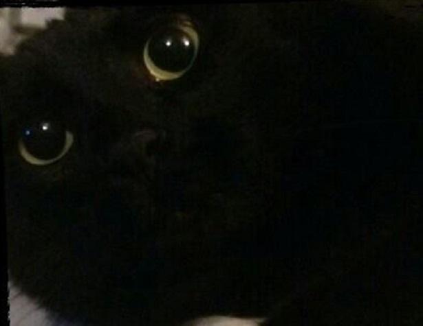gatto nero superstizione