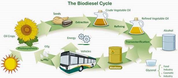 green diesel e biodiesel green diesel