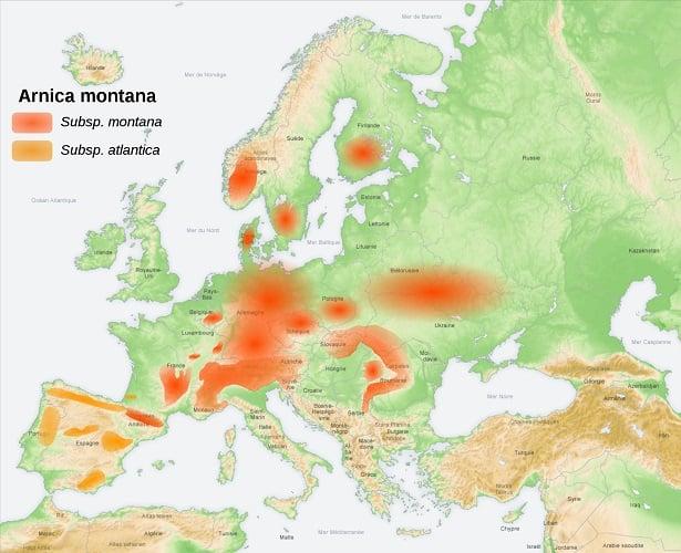 arnica montana cartina