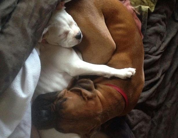 Boxer: origini
