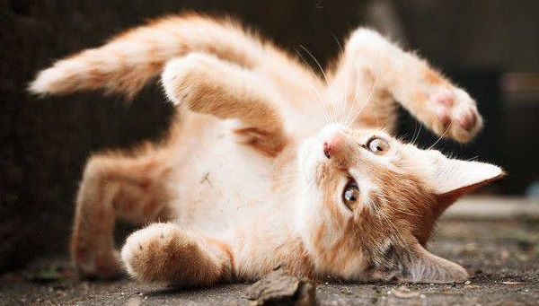 video gattini
