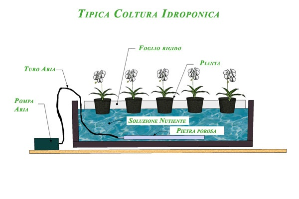 coltivazione idroponica in casa