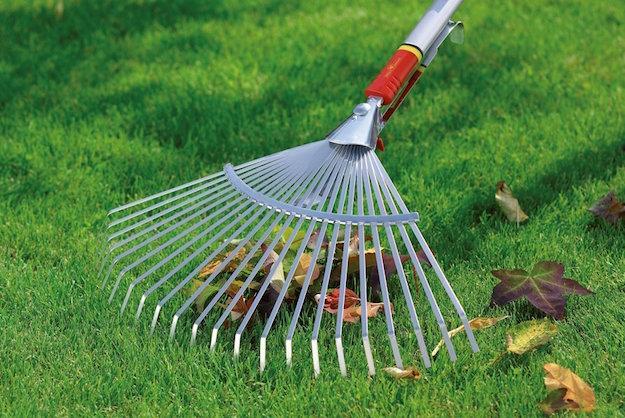 rimuovere foglie da giardino