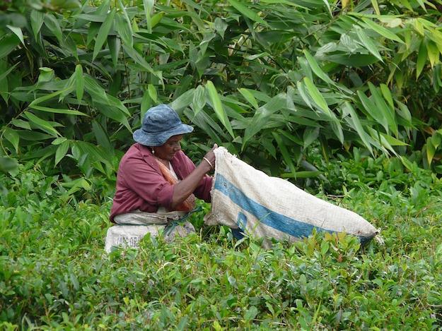 the verde proprieta benefici