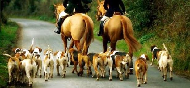 cane foxhound origini