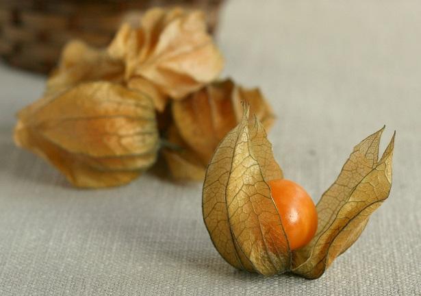 Alchechengi frutto