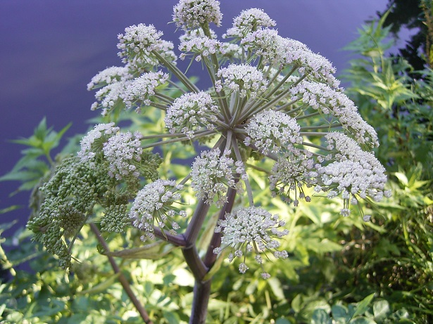 angelica foto