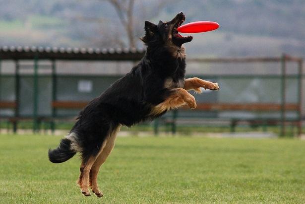 come giocare con un cane