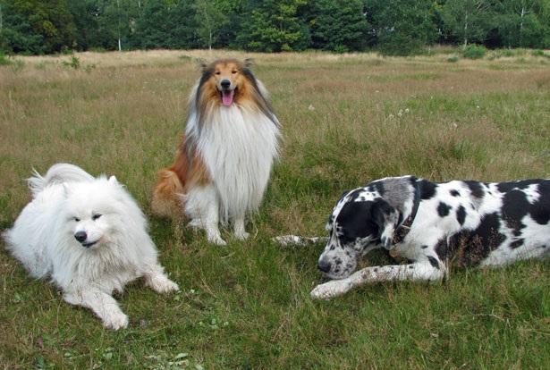 come i cani si riconoscono tra loro