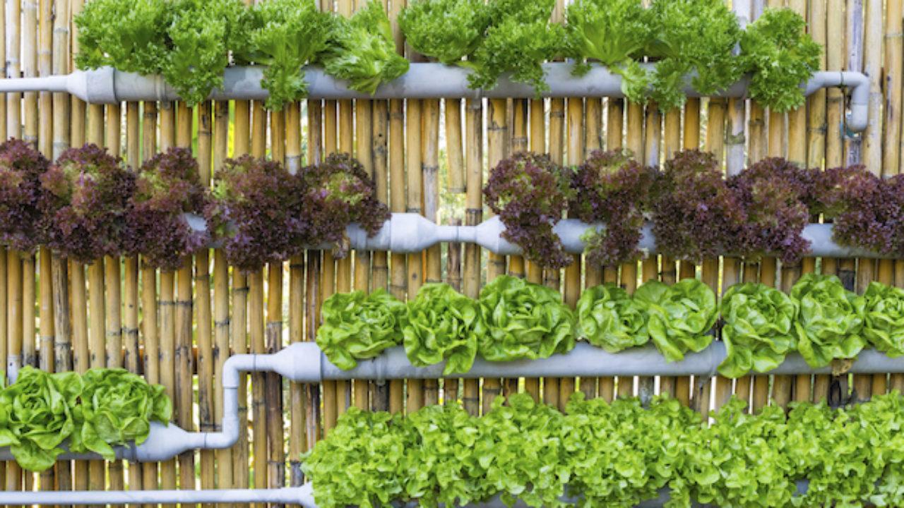 Giardini Verticali Fai Da Te giardino verticale con grondaie e tubi - idee green