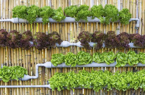 giardino verticale tubi