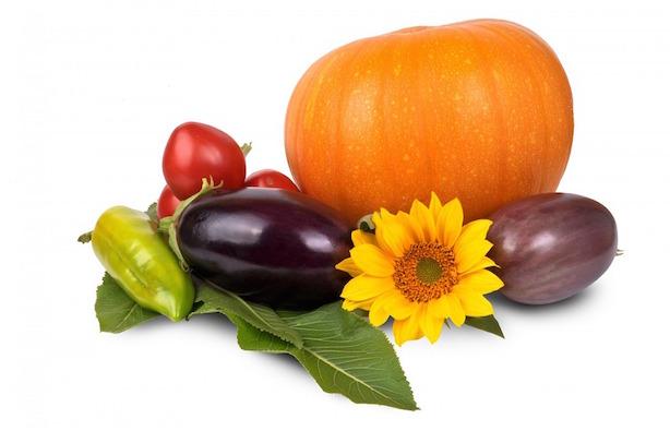 piante ortaggi facili da coltivare