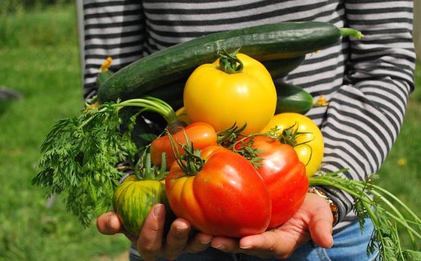 ortaggi da coltivare a maggio